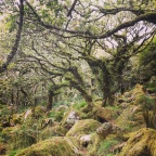Dartmoor's Best Kept Secret – Wistman's Wood